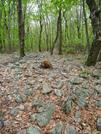 Love Rock by MedicineMan in Views in Maryland & Pennsylvania
