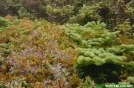 Fragile Alpine Flora