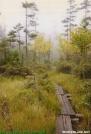 Bog Boards in Maine by Kozmic Zian in Trail & Blazes in Maine