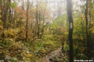 Great Fall Day in The Woods