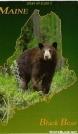 Bear Post Card