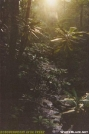 Rododendrons In Creek-VA by Kozmic Zian in Trail & Blazes in Virginia & West Virginia