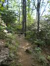 Mountain Laurel In Full Bloom Near Gooch by buzzamania in Other