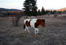 Horse In Grayson Highlands, Va by KevinAce in Other