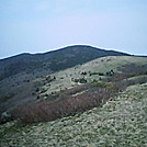 On Roan Mountain