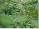 Grasshopper Camouflage
