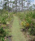 Fl Trail by MagicSFK in Other Trails