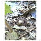 Pics of toad our toad by turtle_tami in Faces of WhiteBlaze members