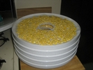 Corn Dehydrating by Ronnie Motrose in Section Hikers