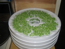 Peas Dehydrating by Ronnie Motrose in Section Hikers