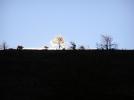 ice tree-sunrise at scales by Belew in Views in Virginia & West Virginia