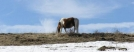 free range pony at Grayson Highlands by Belew in Other