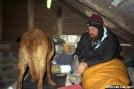 Heald w/ Dog Wonder by tribes in Trail Legends