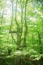My Favorite tree so far by Homer&Marje in Views in Massachusetts