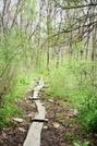 Foot Bridges by Homer&Marje in Trail and Blazes in Massachusetts