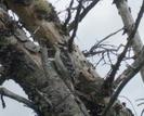 Wood Pecker by Homer&Marje in Trail & Blazes in New Hampshire