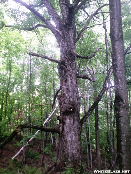 Holloween Tree