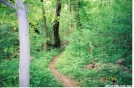 smooth trail by Old Hickory MH in Trail & Blazes in Virginia & West Virginia