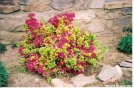 Azalea by Old Hickory MH in Trail & Blazes in Virginia & West Virginia