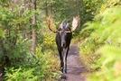 Vv7h861hyv2n 1 by BlindMoose in Moose