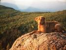 Dog Wonder On North Horn 96 by hobo dank in Thru - Hikers