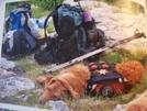 Dog Wonder 06 by hobo dank in Thru - Hikers