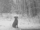 Dog Wonder by hobo dank in Thru - Hikers
