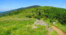 Roan Highlands In June