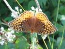 Butterfly by SkraM in Other