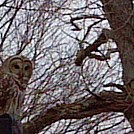 Owl by Chrissy K. McVay in Day Hikers