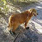 Favorite hiking hounds by Chrissy K. McVay in Day Hikers