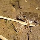 Frog by Zabigail in Members gallery