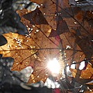 Sun Through Leaves by Zabigail in Members gallery