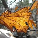 Sunlight And Leaf by Zabigail in Members gallery