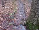 Waterlogged Trail 12/3/09 by ~Ronin~ in Trail & Blazes in Maryland & Pennsylvania