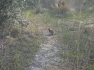 Lil Bunny I Have To Say This Is The Only Critter I Seen On My Walk by GeneralLee10 in Other