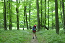 Pictures From The Laurel Highlands Trail In Pa by Rusticus in Other Trails