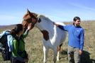 Hermes And Gangsta Virginia Horses