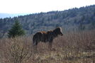 Pony Grayson Highlands Rusticus by Rusticus in Members gallery