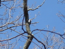A Busy Woodpecker