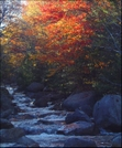 Splashes Of Color On Mt. Katahdin, Baxter State Park, Me by rdsoxfan in Other Galleries