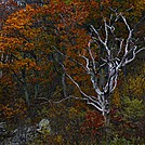 Fall on the Appalachian Trail by Heald in Views in Virginia & West Virginia