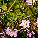Wildflowers by Heald in Flowers