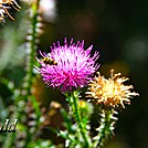 Flower by Heald in Flowers