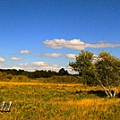 Birch by Heald in Views in Virginia & West Virginia