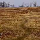 Big Meadows by Heald in Views in Virginia & West Virginia