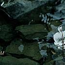 Twig Ice by Heald in Views in Virginia & West Virginia