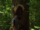 Huge Tree by speedr73 in Trail & Blazes in Georgia
