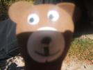 Bear!!! by snaplok in Members gallery