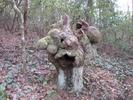 Strange Stump